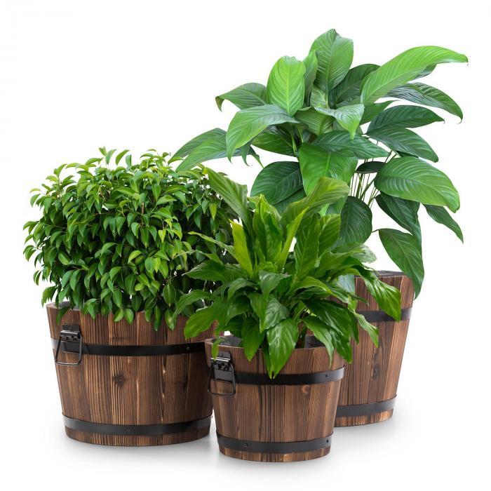 Trifloris trähink-set 3 träbaljor av granträ brun
